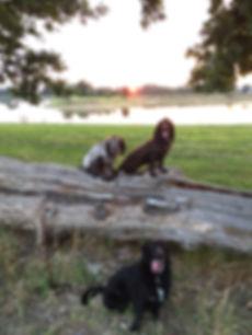 Evening Dog Walk