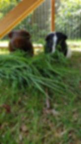 Archie enjoying a rural dog walk.