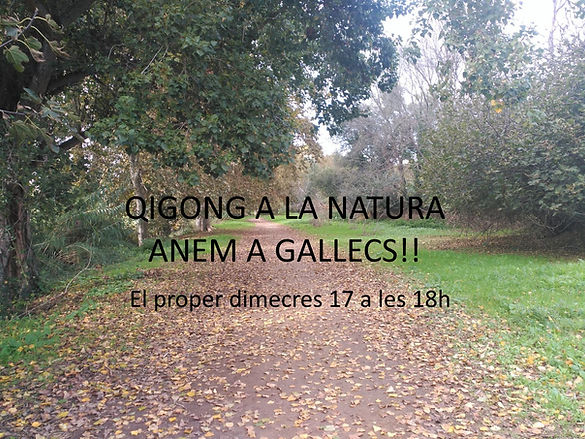 QIGONG A GALLECS.jpg