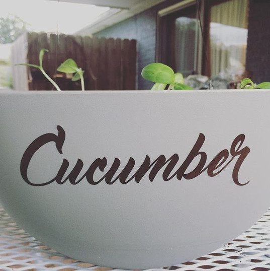 Using the cricut to fancy up some of my