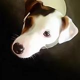 dog pet.PNG