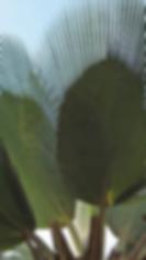 IMG_Plantas.PNG