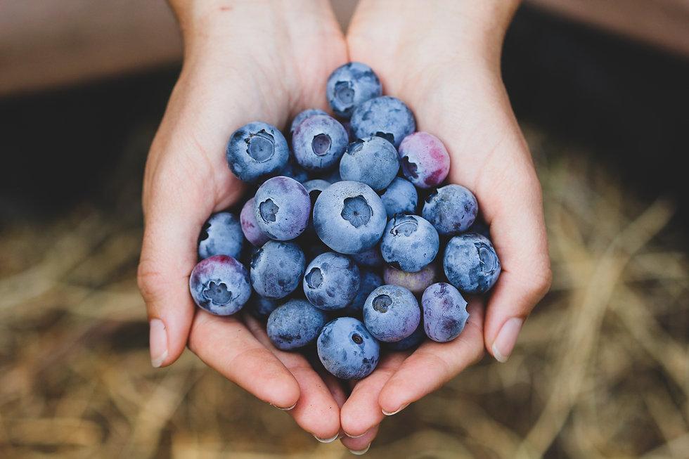 Coastal Moon Blueberries Signature Photo