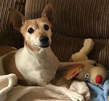 Pet sitter Tadley