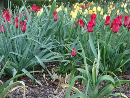 Das Erwachen im Frühjahr
