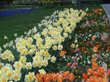 Der Frühling erwacht....