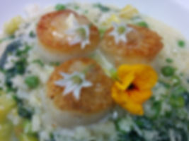 Seared Day Boat Scallops with Stinging Nettle and Garden Pea Risotto