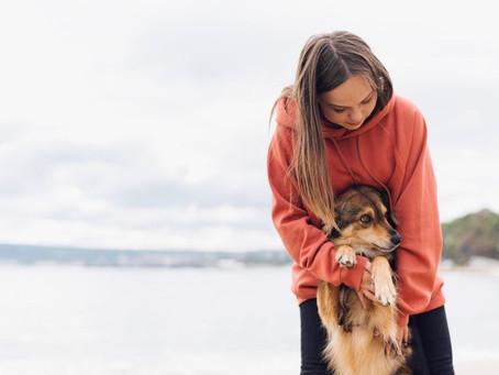 Cura degli animali: cosa sapere sulla biorisonanza veterinaria