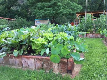Polykulturní zeleninový záhon, udržovaný metodou bez rytí.