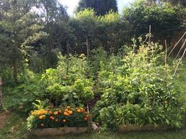 Jednoduchý polykulturní zeleninový záhon, udržovaný metodou bez rytí.