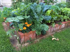 Polykulturní zeleninový záhon formálnějšího stylu
