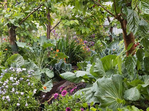 Permakulturní zahrada.jpg
