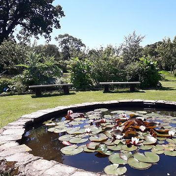 central lilly pond.jpg