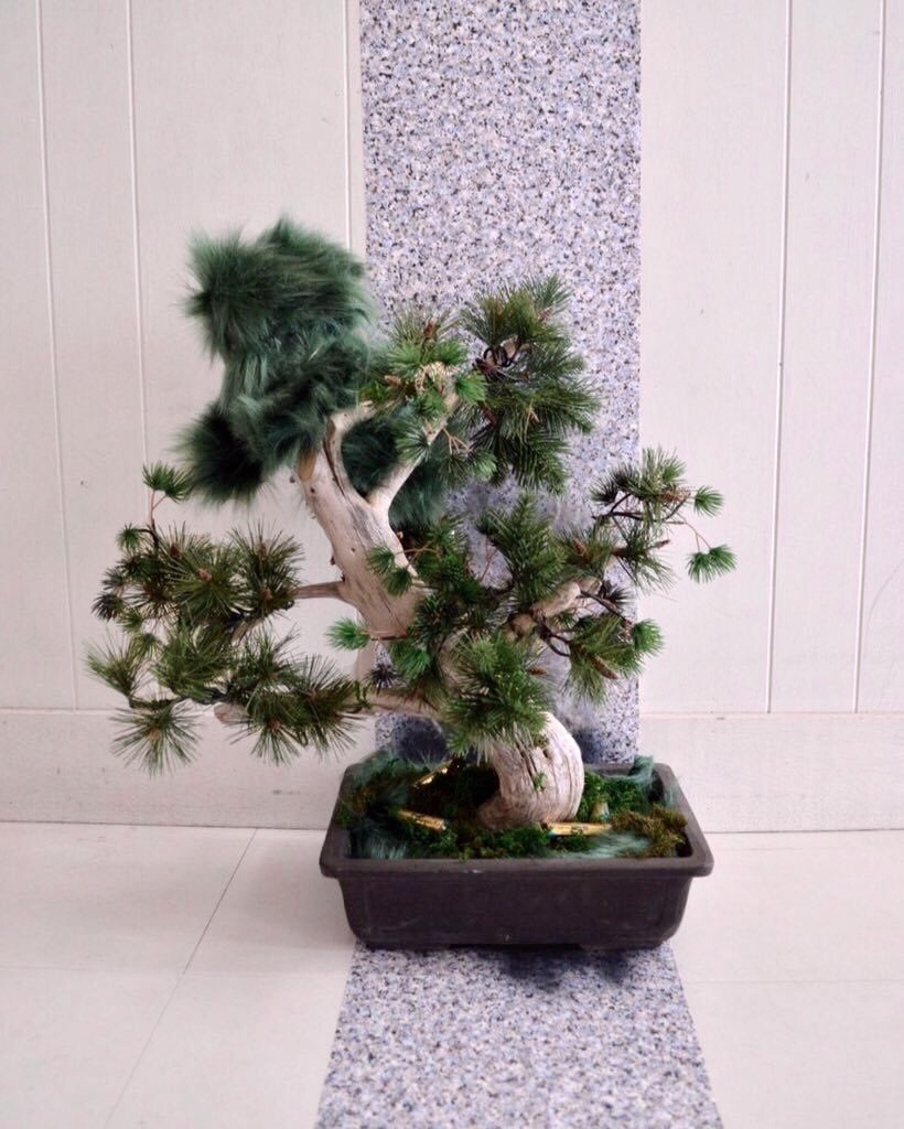 Dog Bonsai