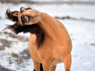 If DreamWorks' Spirit: Stallion Of The Cimarron Moved to Norway