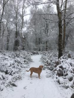 Snowfall Jan 2021