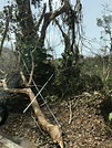 Hurricane Maria Puerto Rico 2017-Surfer Labor