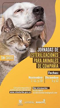 felinos y caninos.jpg