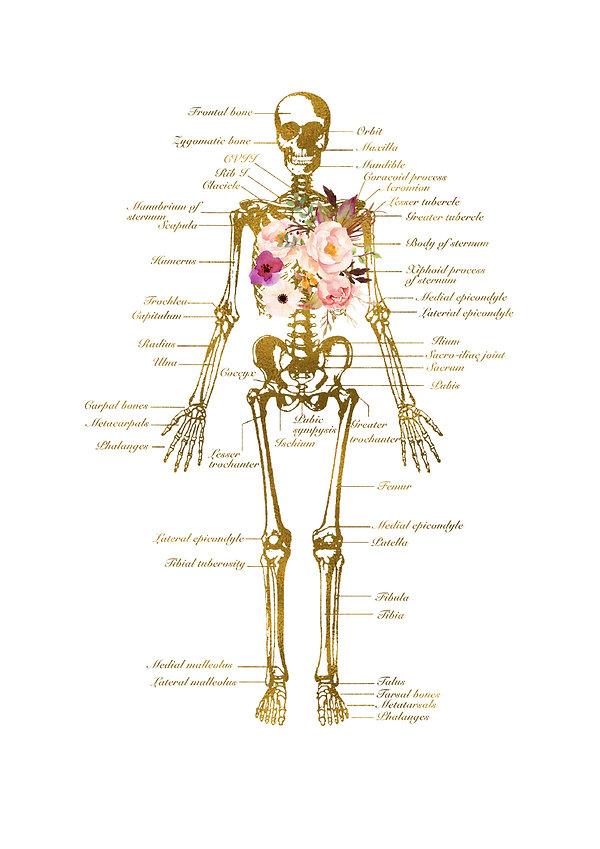 Skeleton front etsy.jpg