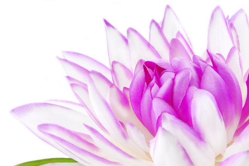 Flower lotus fotolia.jpg