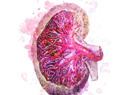 Kidney health part 1