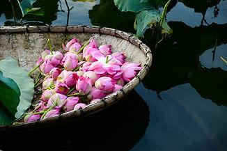 A boat of lotus flower in West Lake, Han
