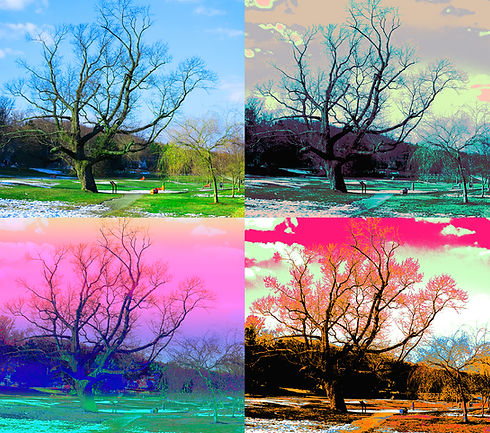 Fantasy_Seasons_In_Goffle_Brook_Park_PRI