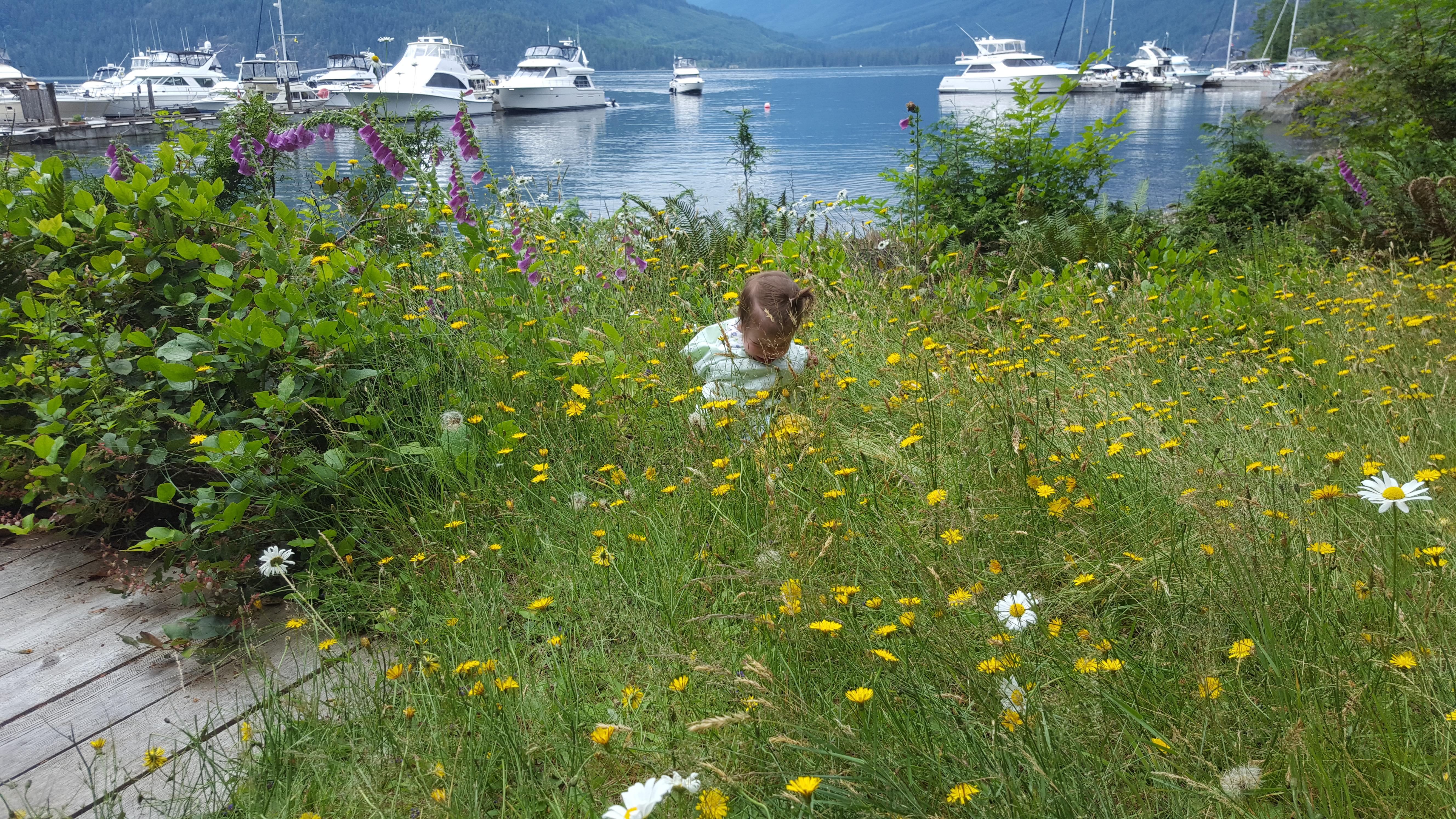 Exploring th daisies at Ekins