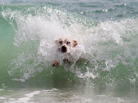 Vacanza con il Cane in Sicilia Noto
