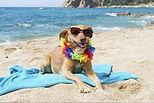 Spiagge attrezzate per cani Riccione