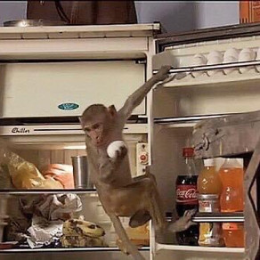 The Monkey In The Fridge