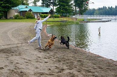 Dog socialization