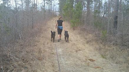 Off leash walking