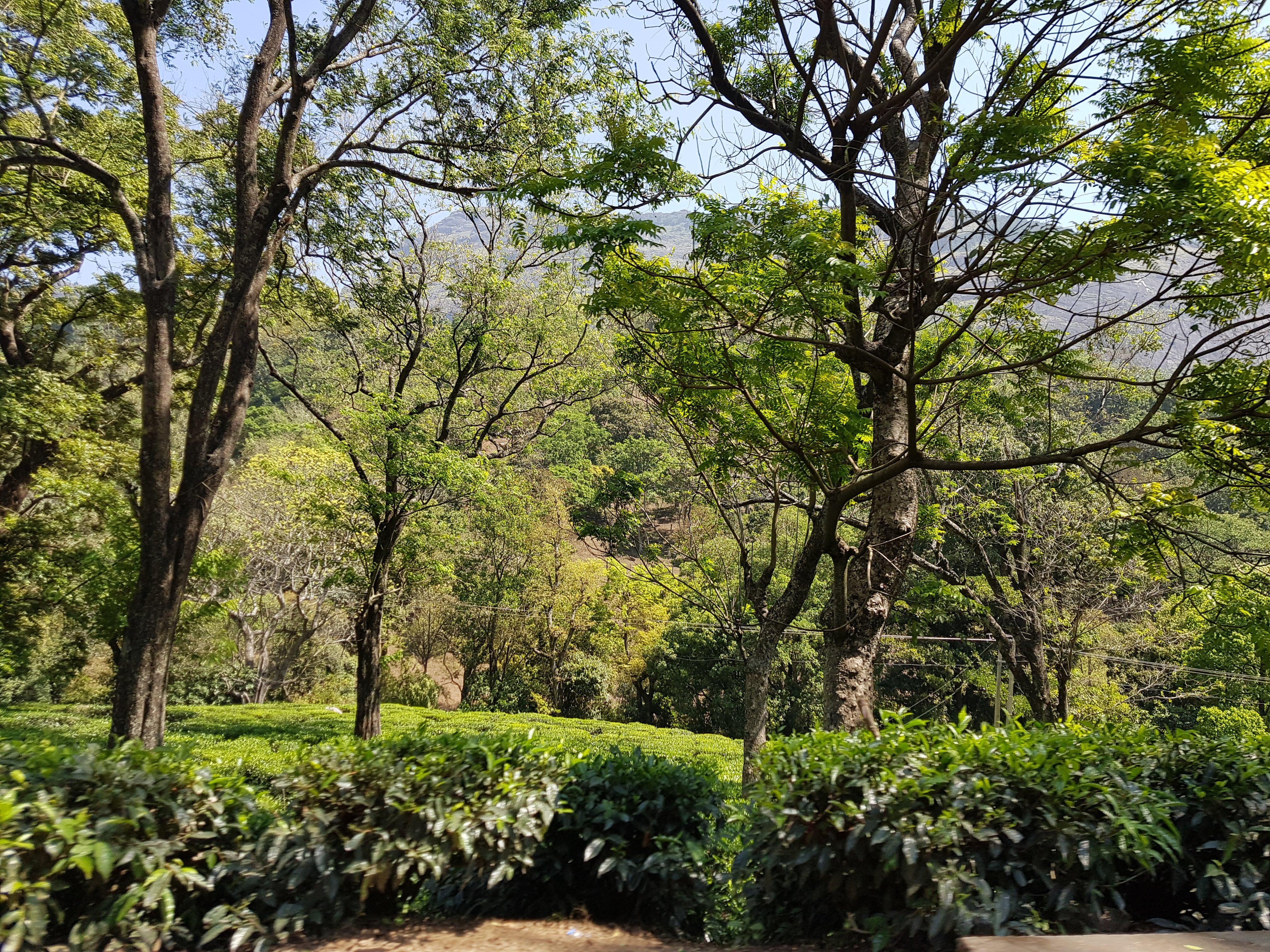 טבע בהודו