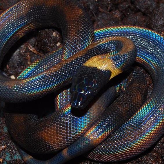 Reptile Breeder | British Columbia | Don Patterson Reptiles