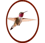 Humming bird png.png