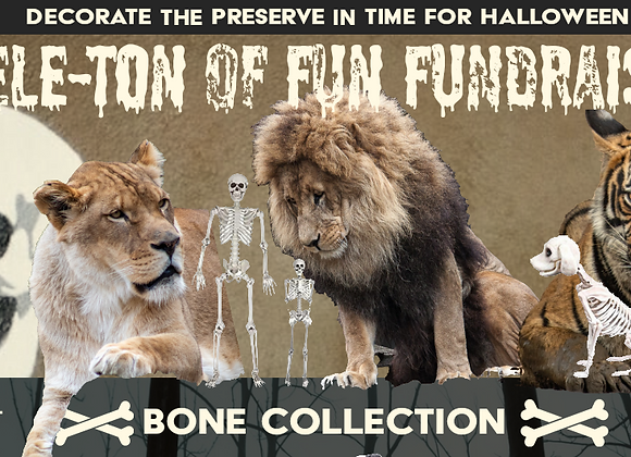 Your choice of Bone Collection