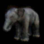 elephant-3967732_1920.png
