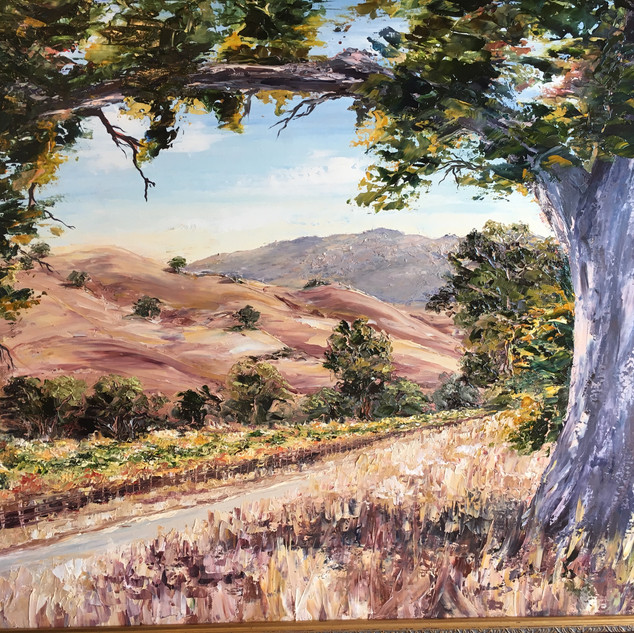Vineyard View - Sycamore Grove - Livermore