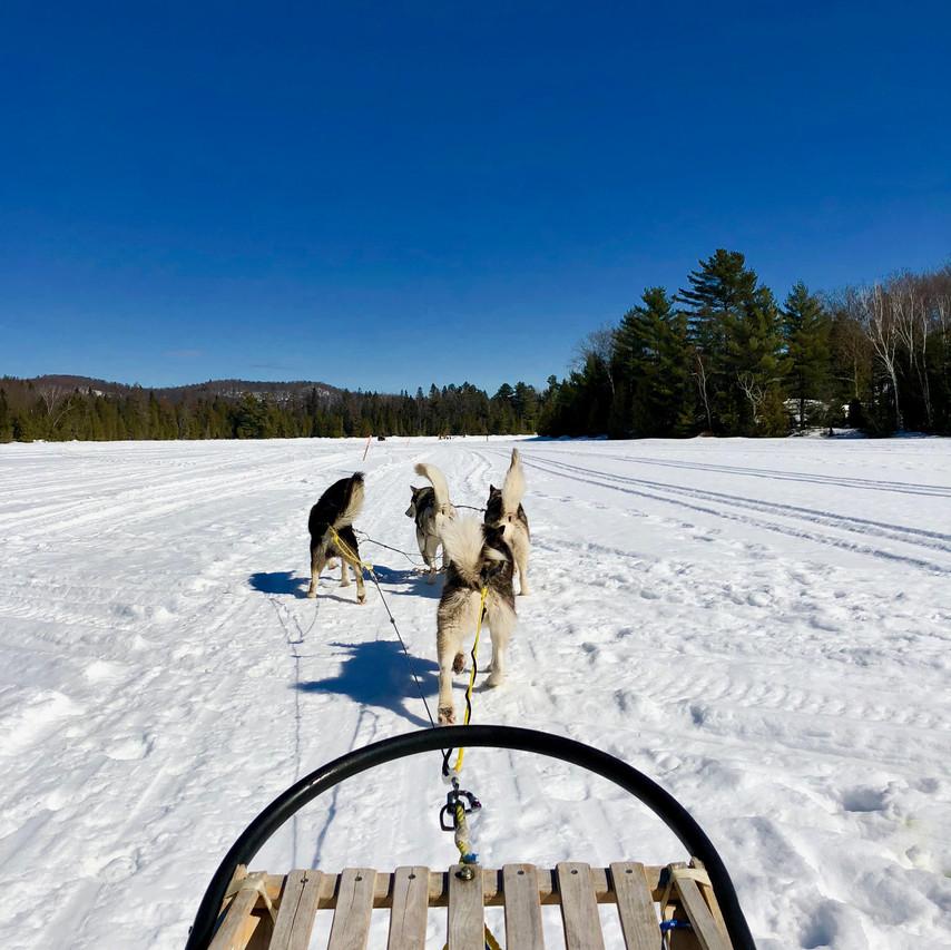 Dog Slidding - Saint Hyppolite