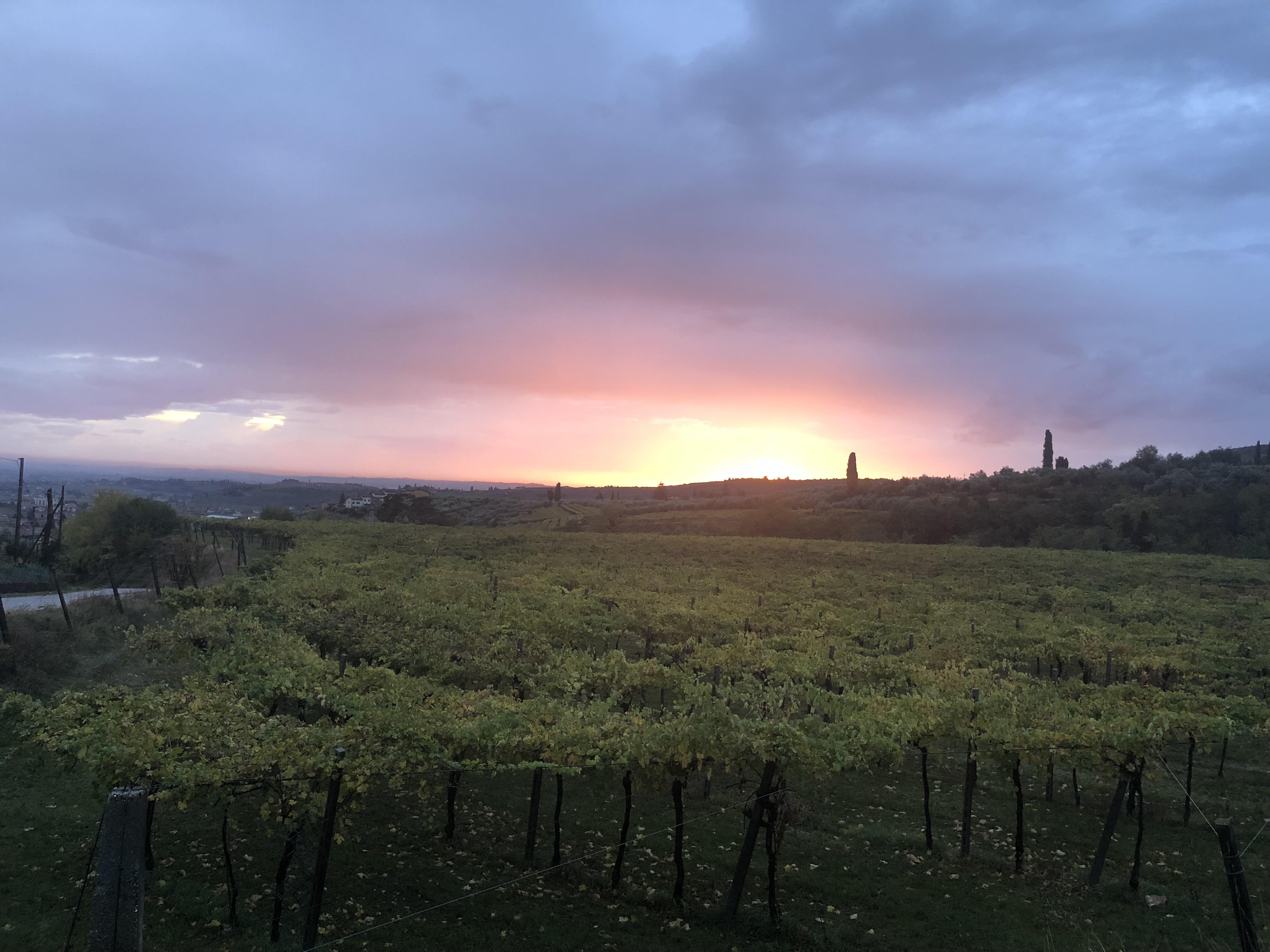 Valpollcella - Italy
