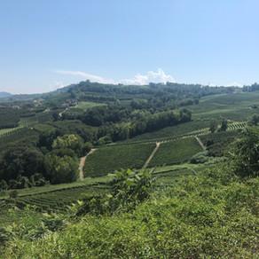 Piedmont wine treasure : The Langhe