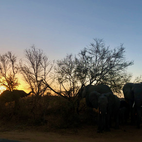 Kruger Park: a real bush experience
