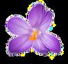 saffron_flowers.png