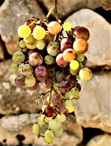 Very Young Wine