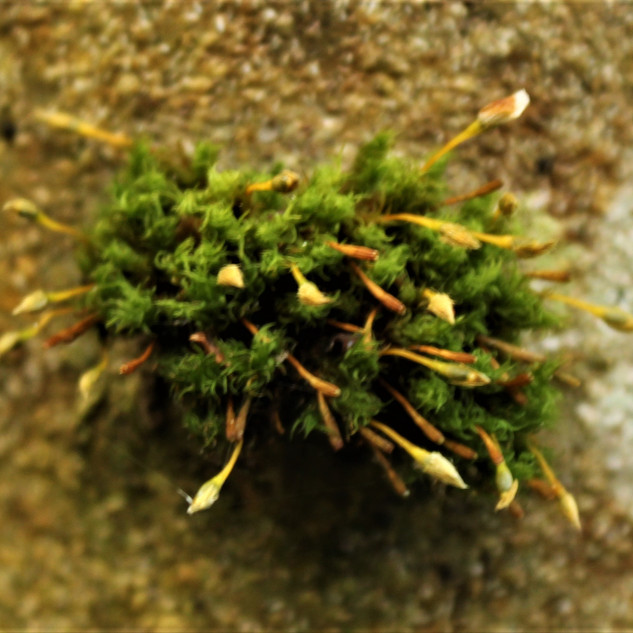 A moss tree?