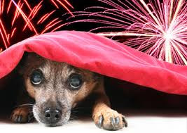 IS MY DOG SCARED OF FIREWORKS?