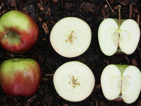 Cocinar manzanas al aire libre