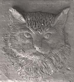 Рельеф кота