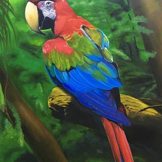 Попугай в джунглях